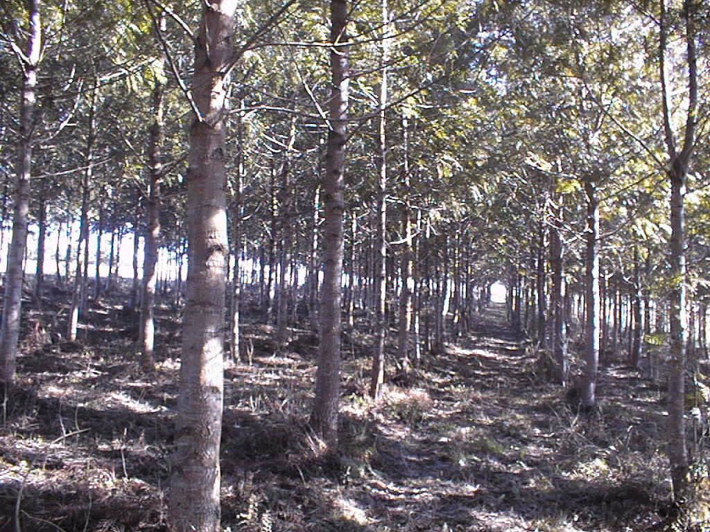 Cultivo Da Grev 237 Lea Nas Regi 245 Es Sul E Sudeste Do Brasil